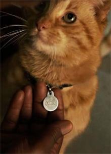 "Создатели ""Капитана Марвел"" объяснили выбор кота вместо кошки"