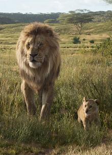 """Кассовые сборы """"Короля льва"""" превысили полтора миллиарда"""